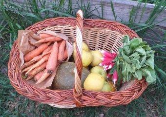 panier de légumes du drive fermier le bersac, Serres